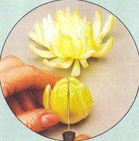 Decorations avec des l gumes for Decoration de plat avec des legumes