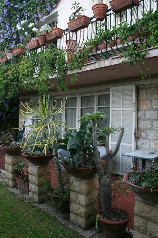 mon balcon et ma terrasse aux succulentes en ce moment. Black Bedroom Furniture Sets. Home Design Ideas