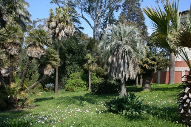 Villa thuret d 39 antibes for Jardin villa thuret