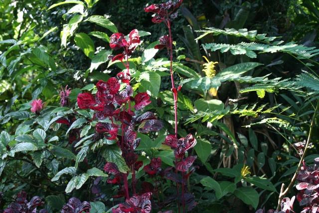 Identifi e ir sine comment s 39 appelle cette plante for Cote hors gel
