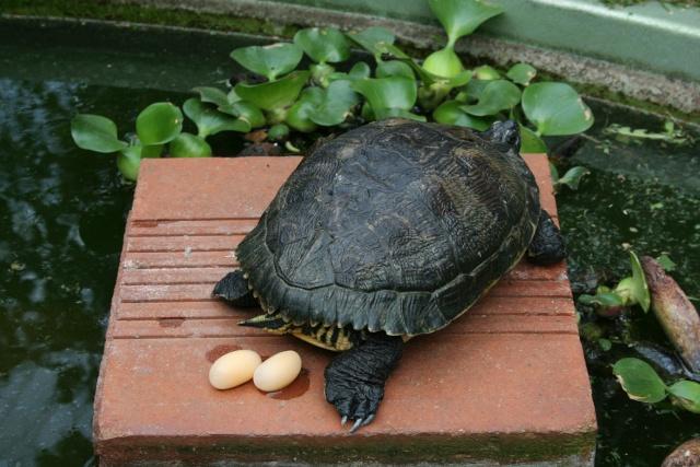 Mon petit bassin de devant avec locataire - Bassin pour tortue aquatique villeurbanne ...