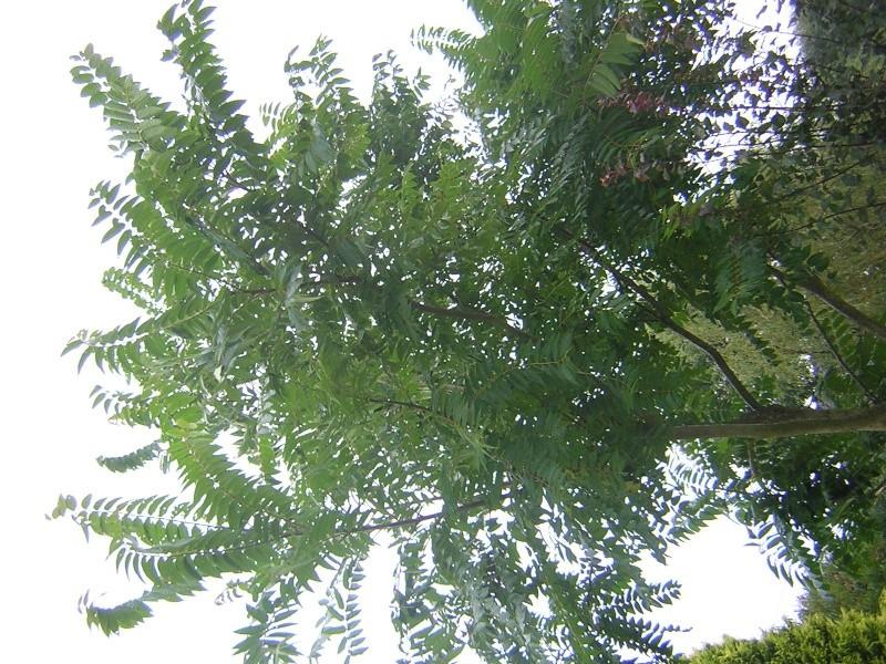 Quel est le nom de cette arbre?