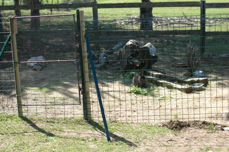 L 39 enclos des lapins for Enclos exterieur pour lapin