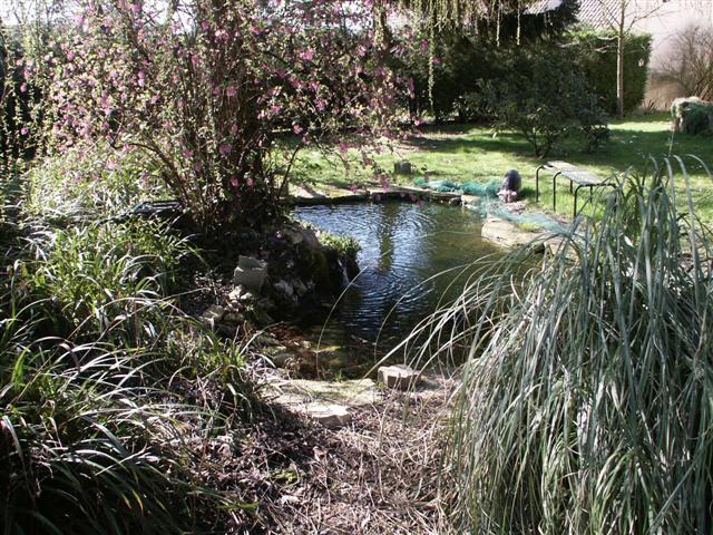 Le bassin du beauf for Carpe koi truffaut