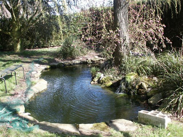 Le bassin du beauf for Bache etang belgique