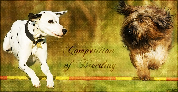 Competition Of Breeding