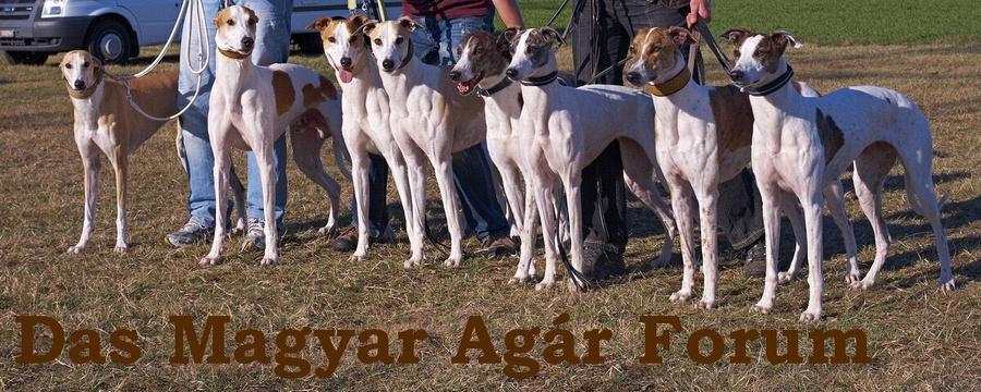 Das Magyar Agar Forum