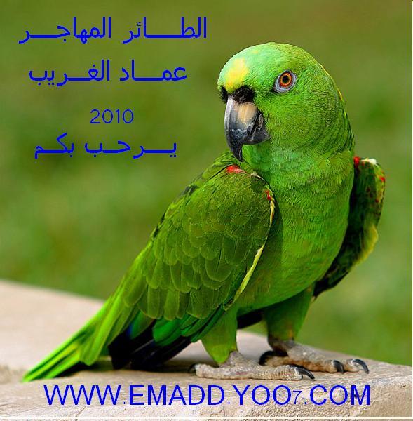 الطائر المهاجر