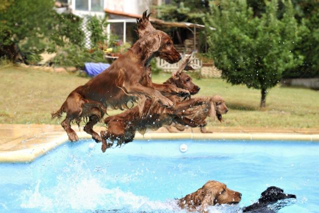 Le chien peut il se baigner dans une piscine au chlore - Peut on se baigner dans une piscine trouble ...