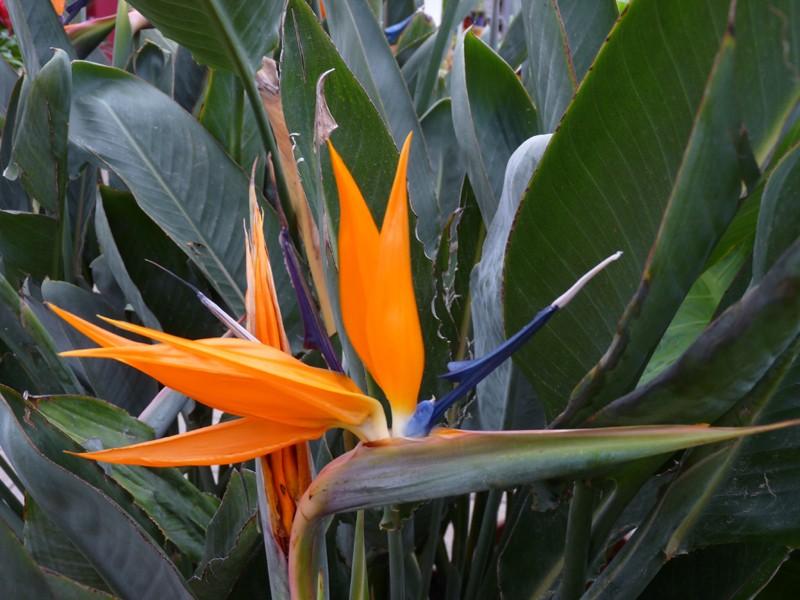 plante exotique bec de perroquet