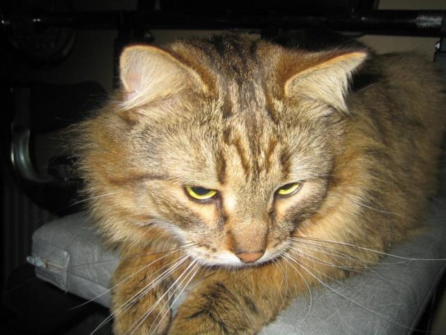 Urgent chat sib cherche nouvelle maison for Adaptation chat nouvelle maison