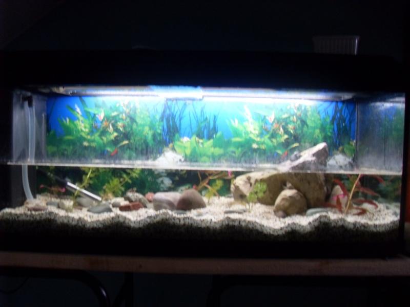 Aquarium emydura for Aquarium tortue aquatique