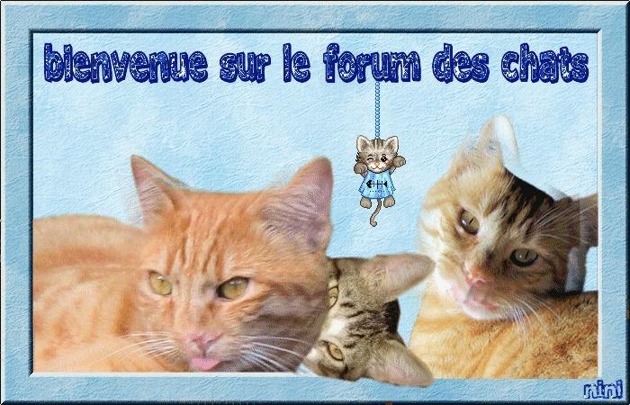 forum du chat