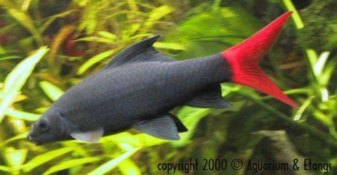 Dechet des poissons for Nourriture poisson rouge super u