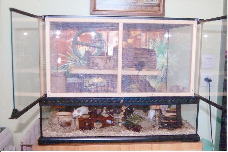 a ration estivale maison d 39 un terrarium pour souris. Black Bedroom Furniture Sets. Home Design Ideas