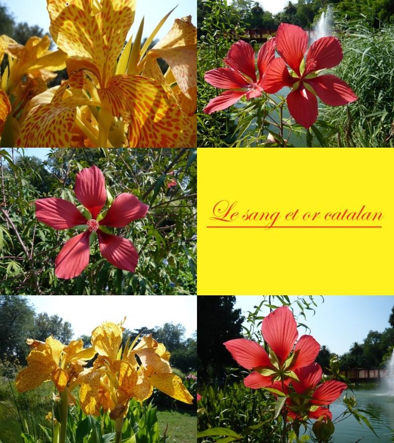 Jardin botanique de st cyprien 66 for Jardin 66
