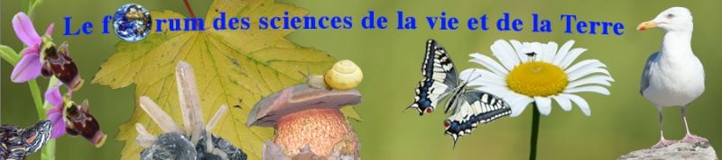 Le forum des sciences de la vie, de l'espace et de la Terre