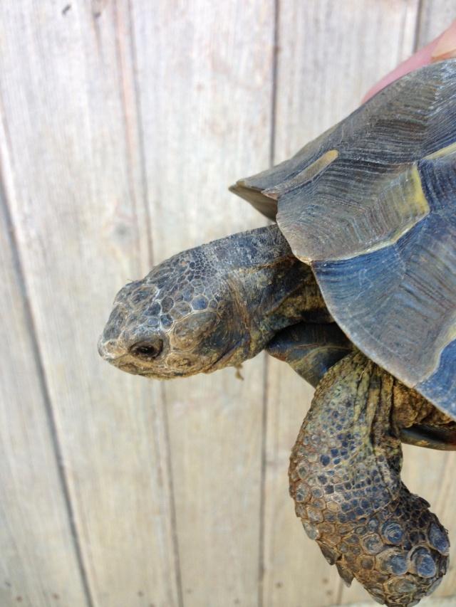 J 39 ai failli avoir une nouvelle tortue for Avoir une tortue a la maison