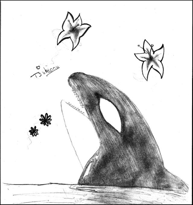 Les orques c 39 est tout un art page 2 - Dessin d orque ...