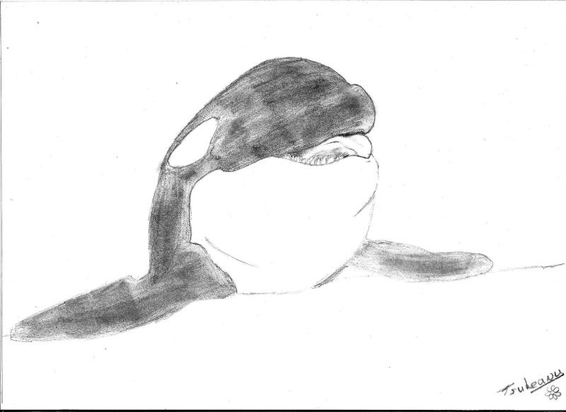 Les orques c 39 est tout un art - Dessin d orque ...