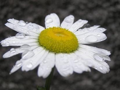 Simplement dans MOMENT DE VIE fleur10