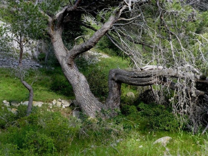 Sculptures de bois dans GRUISSAN p1040112