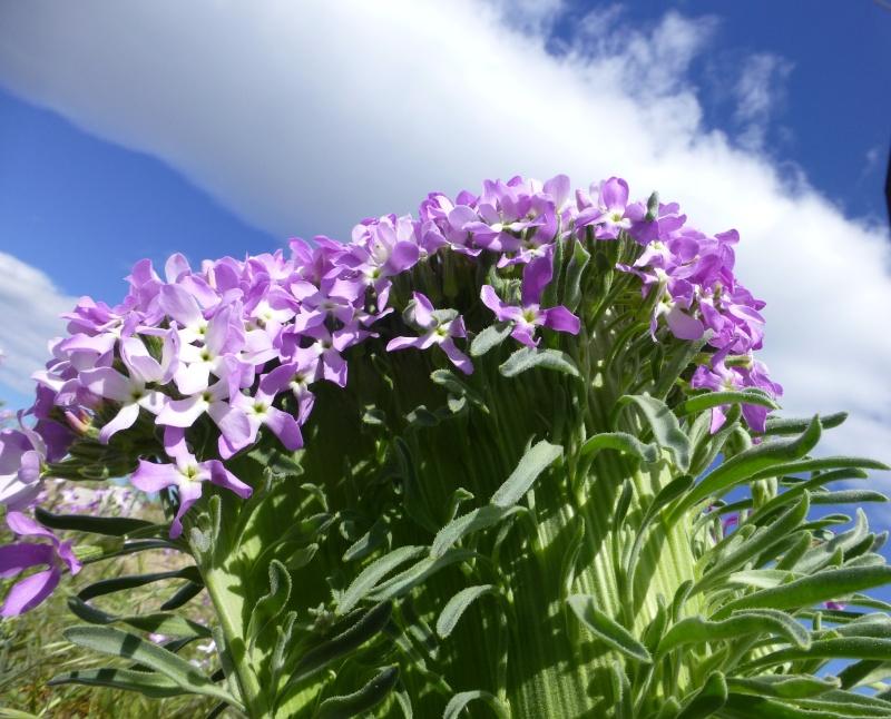Femme-fleur dans GRUISSAN p1040310