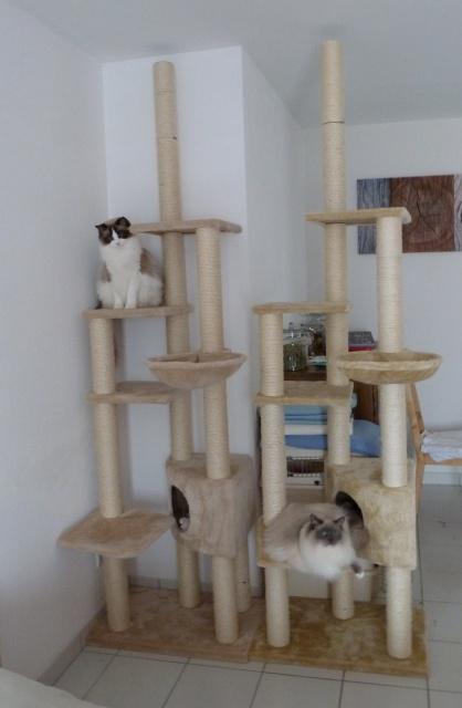 arbre a chat ragdoll