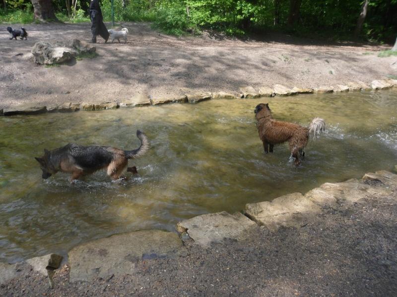 balade avec chiens au bois de Vincennes ou for u00eat de Clamart Page 4 # Bois De Vincennes Chien
