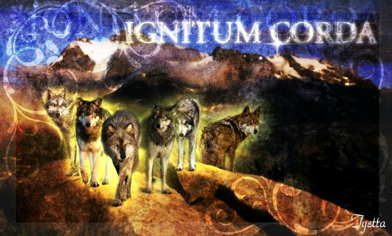 '~.:Ignitum Corda:.~'